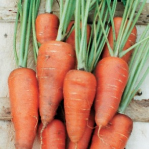 Carrots - Early Maincrop