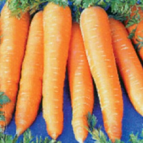 Carrots - Late Maincrop