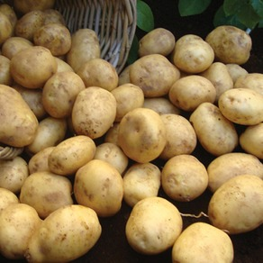 Early Maincrop Seed Potatoes