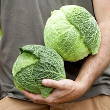 Cabbage Savoy Seeds - D'Aubervilliers (Non Organic)