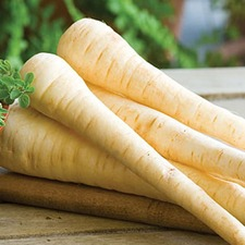 Parsnip Seeds - Hollow Crown (Non Organic)
