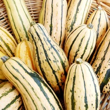 Squash Seeds - Honey Boat (Non Organic)