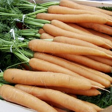 Carrot Seeds - Merida F1 (Organic)