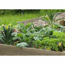Large Autumn Veg Patch - 784634