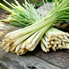 LEMON GRASS  3 Plants - ORGANIC