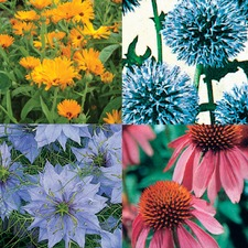 SEED COLLECTION 'Bee-Friendly Flowers' (organic) COLL7