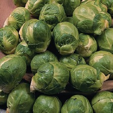 BRUSSELS SPROUT Seven Hills (non organic)