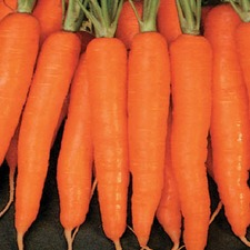 CARROT Amsterdam Forcing (organic) CRAM
