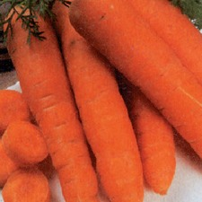 CARROT Autumn King, 15g pack (organic) CRAU1