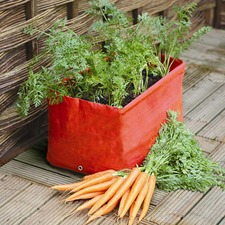 CARROT PLANTER, pack 2 PTCP
