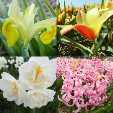 ECOBULBS COLLECTION 'Fragrant Flowers' (organic) EBFR