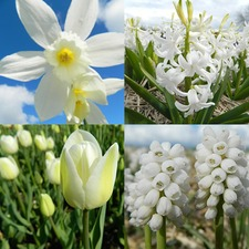 ECOBULBS COLLECTION 'White Flowers' (organic) EBWF