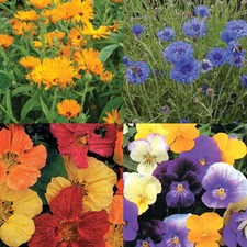 SEED COLLECTION 'Edible Flowers' (organic) COLLE