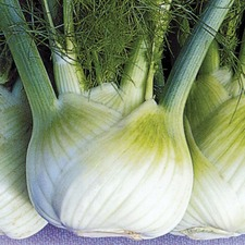 FLORENCE FENNEL Finale ORGANIC SAVER PACK