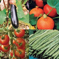 SEED COLLECTION 'Flowering Vegetables' (organic) COLLV