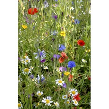 Colourful Annuals Mix 421535
