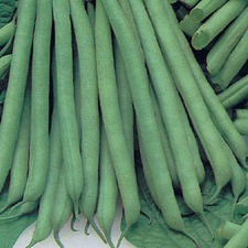 FRENCH BEAN Slenderette (organic)