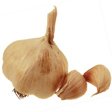 GARLIC Picardy Wight, 3 Bulbs (non organic) GAPW