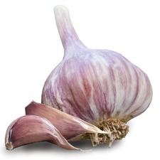 GARLIC Red Duke, 2 Bulbs, (non organic) GARD