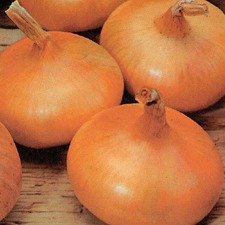 ONION SETS Stuttgart Giant, 5 packs (non organic) OSSG1