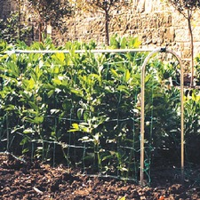 PEA HOOPS WITH NETTING, master 1.8m PEHP