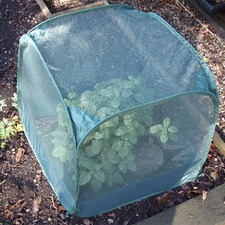 POP-UP MINI NET CLOCHE, pack 3 PUMN3