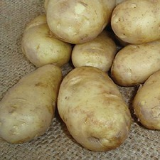 POTATO Arran Pilot, 2.5kg pack (non organic) PNAP