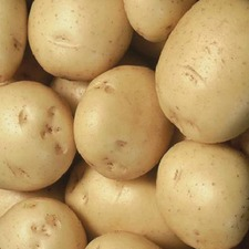 POTATO Colleen, 1kg pack (organic)