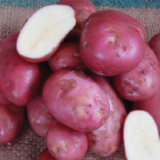 POTATO Desiree, 1.5kg pack (organic) PODE