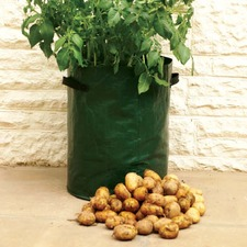 POTATO PLANTERS, 3 packs of 3 PTPL3