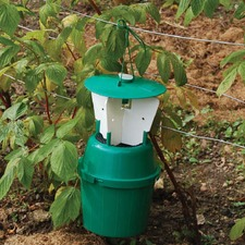 RASPBERRY BEETLE TRAP RBET