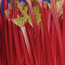 Rhubarb Crowns - Raspberry Red 3 Crowns (Non Organic)