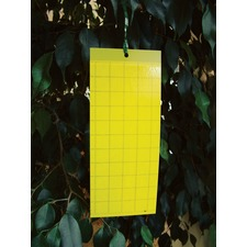 Yellow Sticky Traps - Pack of 7