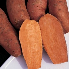 SWEET POTATO Beauregard, 25 slips (non organic) PNSB2