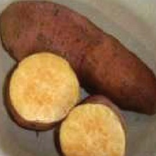 SWEET POTATO T65, 5 slips (non organic) PNST5