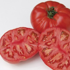 TOMATO Country Taste F1 (organic) TOCT