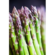 Asparagus Crowns - Mondeo F1 10 Crowns (Non Organic) (1 year old)