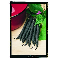 Bean French Climbing Plants - Cosse Violette (10) (Organic) 784294