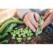 Broad Bean Seeds - Imperial Green Longpod Twin Pack 430760