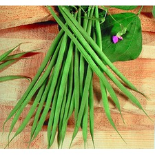 FRENCH BEAN Aiguillon (organic) FBAG