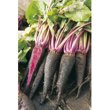Beetroot Seeds - Rouge Crapaudine (Non Organic)
