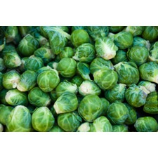 Brussels Sprout Plants - Evesham Special  (10) (Organic)