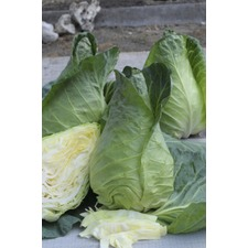 Cabbage Seeds - Greyhound  Triple Pack (Non Organic) 433142