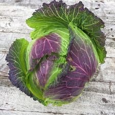 Cabbage Savoy Seeds - January King 3 Triple Pack