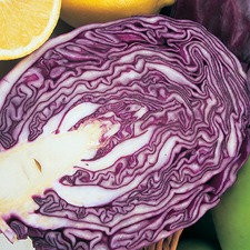 RED CABBAGE Red Drumhead, 10 plants (organic) VCRD
