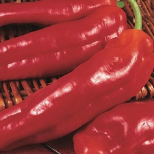 SWEET PEPPER Long Red Marconi, (Organic) VPEM