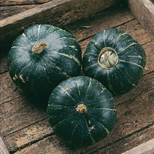 WINTER SQUASH Buttercup, 3 plants (organic) VSBU