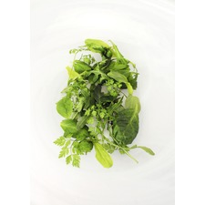 Leaf Salad Seeds - French (Non Organic) 436583