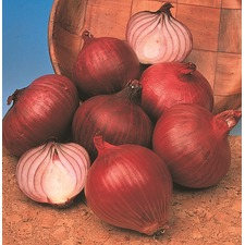 ONION Red Baron (organic) ONBR