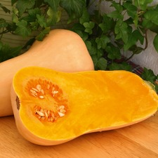BUTTERNUT SQUASH GRAFTED HUNTER
